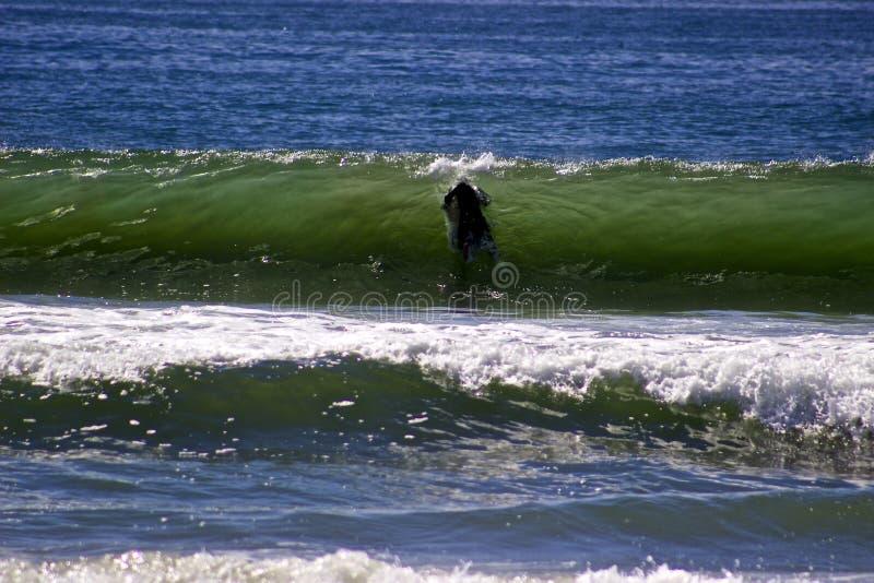 Surfista do oceano fotos de stock royalty free