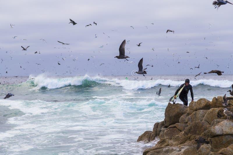 Download Surfista Em Rochas Entre Pássaros De água Numerosos Gaivotas E Pássaros Que Sentam-se Nas Rochas, Monterey Dos Cormorões, Califór Imagem Editorial - Imagem de barking, cormorants: 65576395