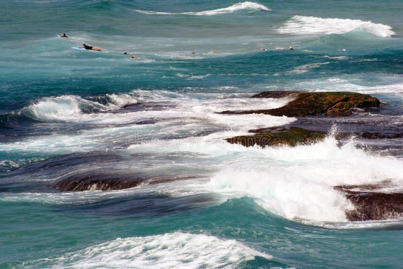 Surfista Sydney dell'Australia fotografia stock
