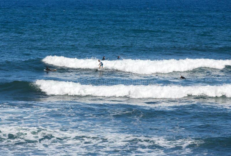 Surfisti nell'azione sull'isola del Madera fotografie stock libere da diritti