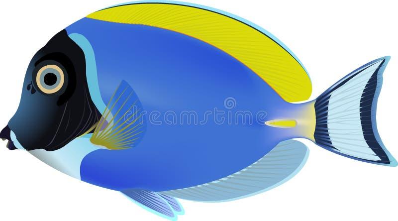 Surgeon-fish de bleu de poudre illustration stock