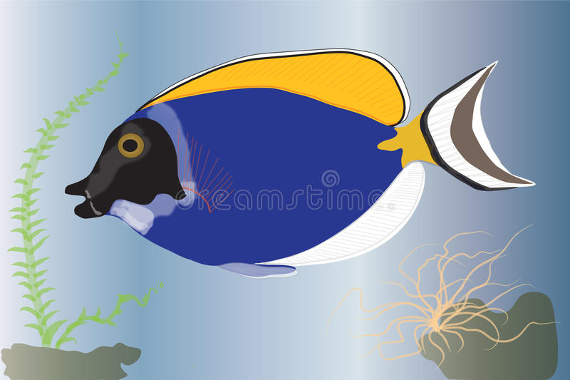 surgeonfish ilustracja wektor
