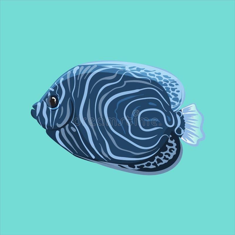 Surgeonfish di vettore immagini stock