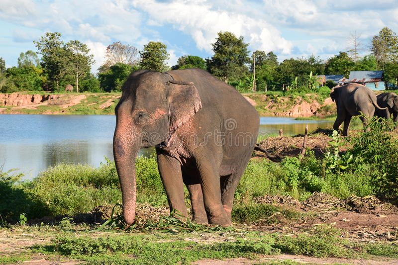 Surin της Ταϊλάνδης στοκ εικόνες