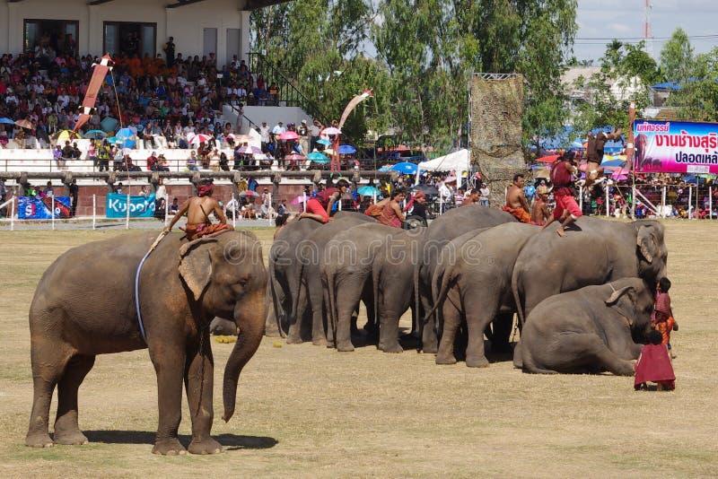 The Surin Elephant Round-up stock photo