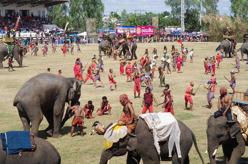 The Surin Elephant Round-up royalty free stock photos