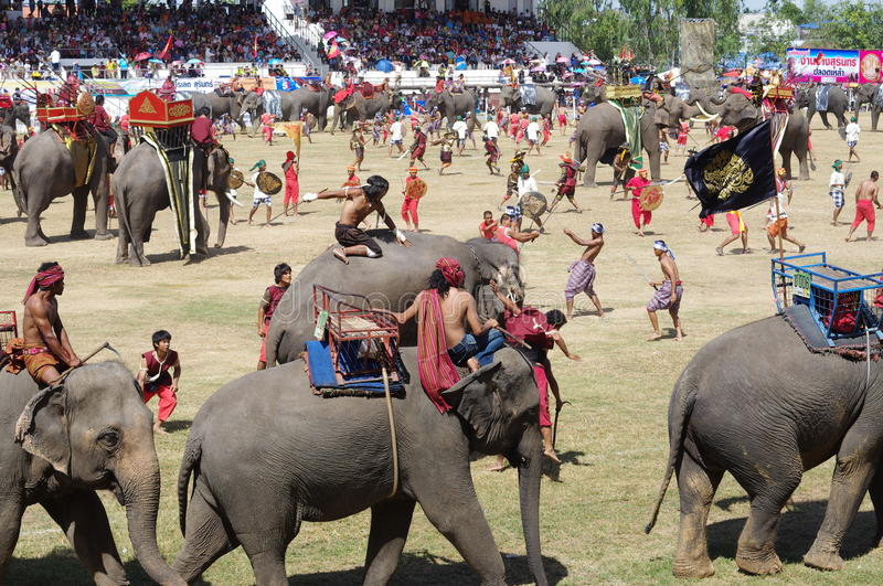 The Surin Elephant Round-up stock photography