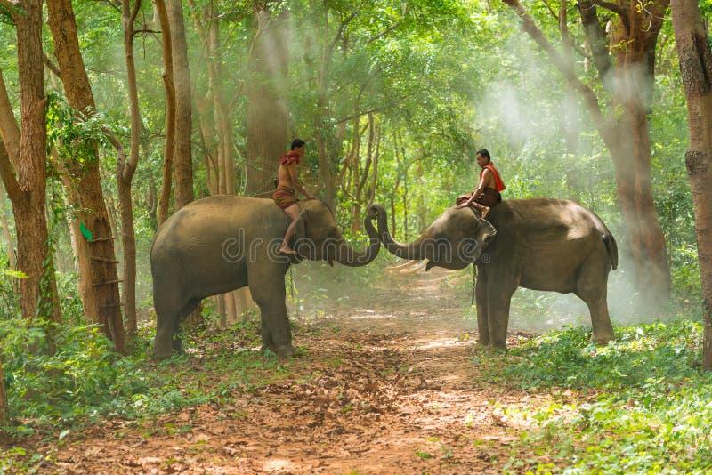Mahouts riding elephants playing on walkway stock image