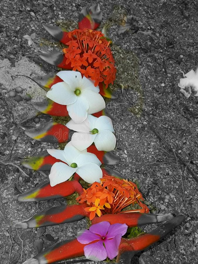 Suriname flower royalty free stock photography