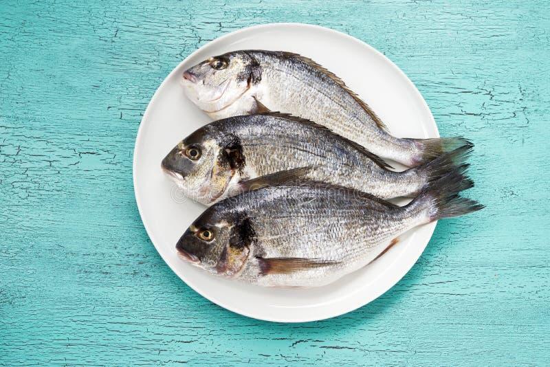 Surowa dorado ryba na bielu talerzu na błękitnym tle Odgórny widok fotografia royalty free