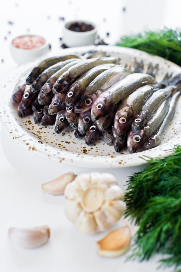 Surowa makrela na talerzu, koper, menchia soli, pieprz i czosnek Bia?y t?o, odg?rny widok, przestrze? dla teksta zdjęcie stock