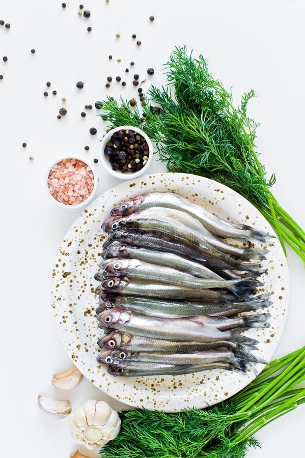 Surowa makrela na talerzu, koper, menchia soli, pieprz i czosnek Bia?y t?o, odg?rny widok, przestrze? dla teksta obrazy stock
