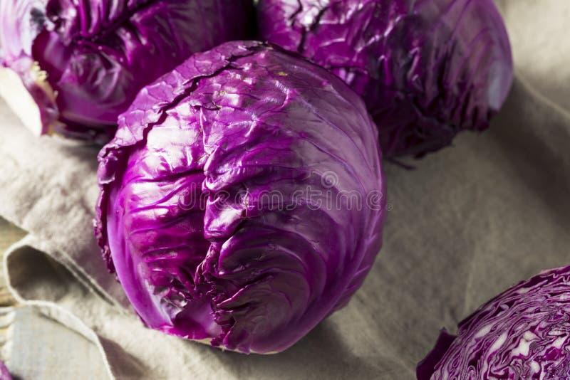 Surowa Organicznie Purpurowa kapusta obraz stock