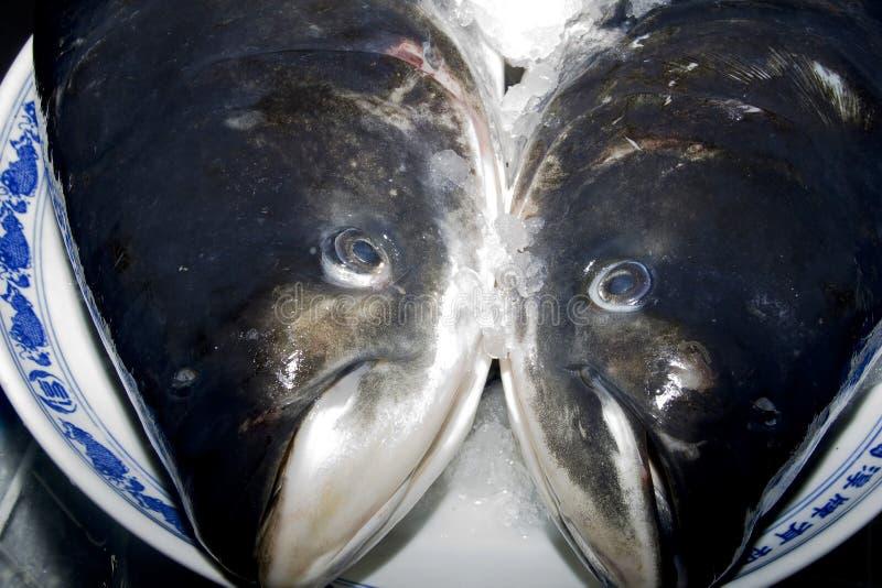 Surowa ryba obraz royalty free