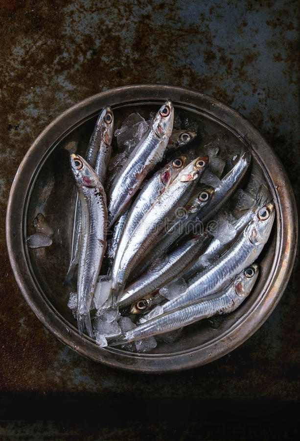 Surowe świeże sardeli ryba zdjęcia royalty free