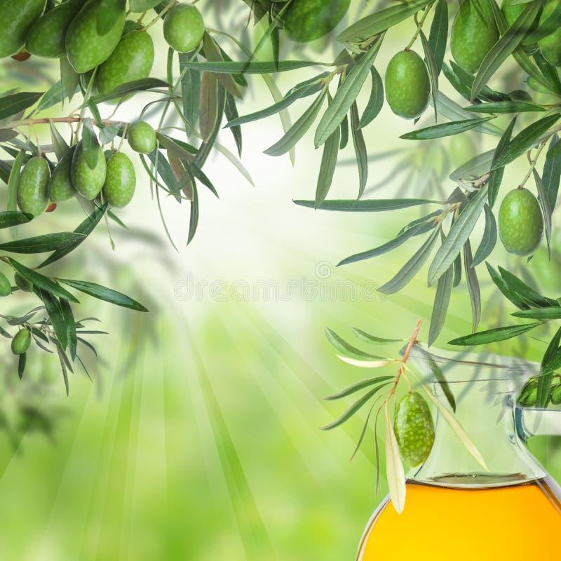 Surowe Kalamata oliwki na drzewo oliwne gałązce i oliwa z oliwek szkle fotografia royalty free
