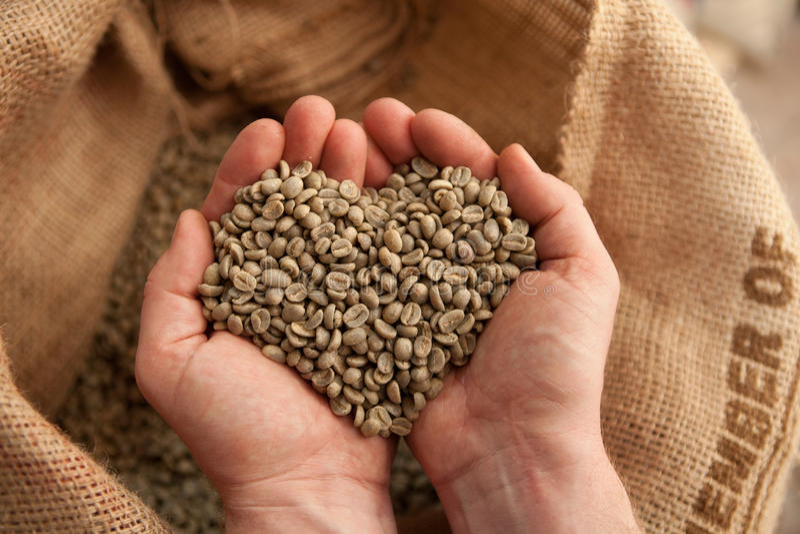 Surowe kawowe fasole trzyma w rękach coffeelover - serce - obrazy royalty free