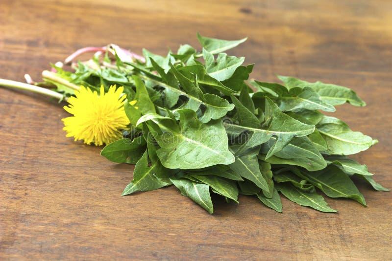 Surowe organicznie dandelion zielenie obrazy stock