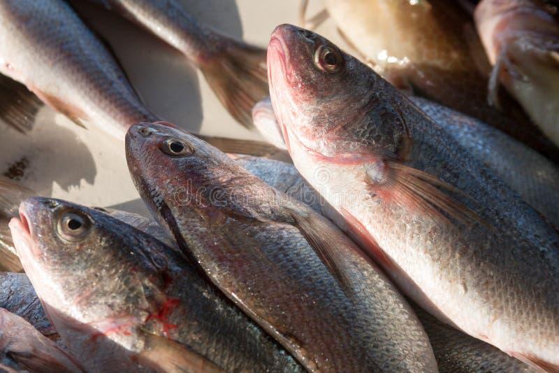 Surowe ryby kłaść przy ulicznym rynkiem zdjęcie royalty free