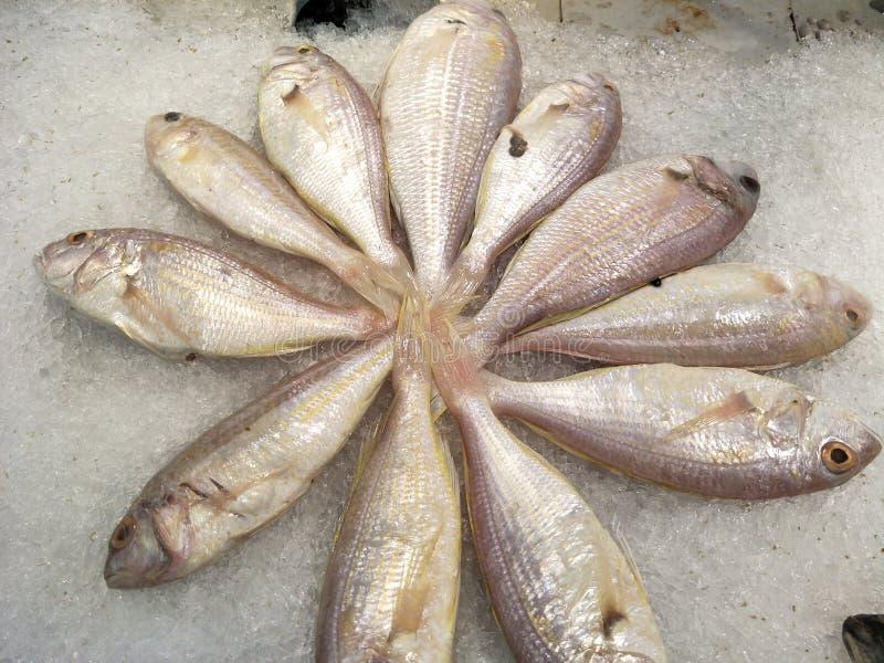 Surowe ryby na rynku fotografia stock