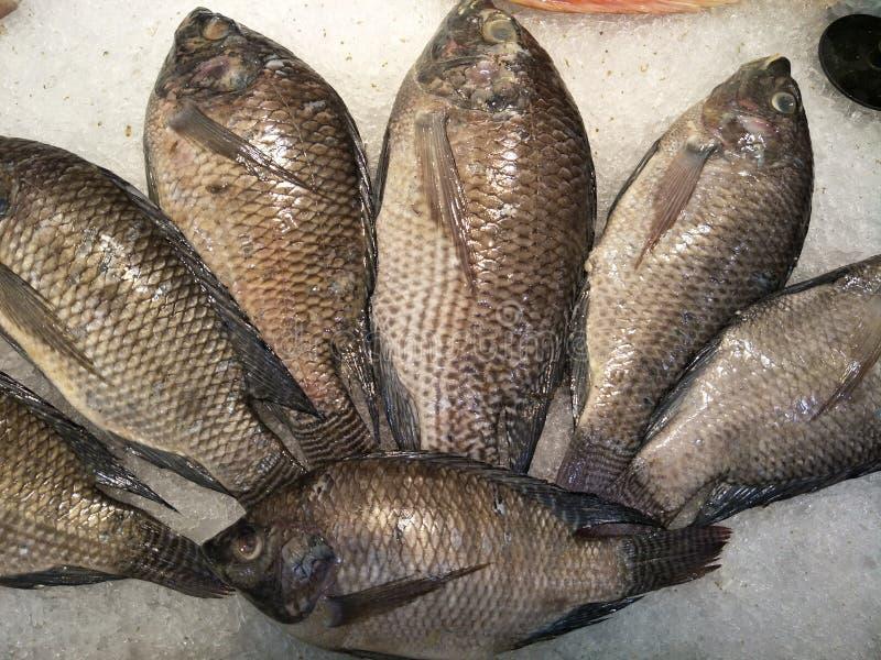 Surowe ryby na rynku zdjęcie royalty free