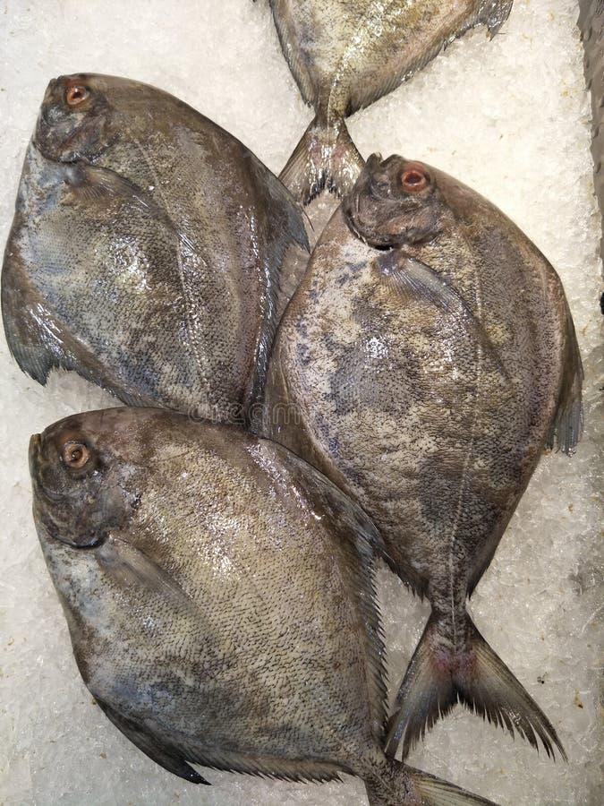 Surowe ryby na rynku obraz stock