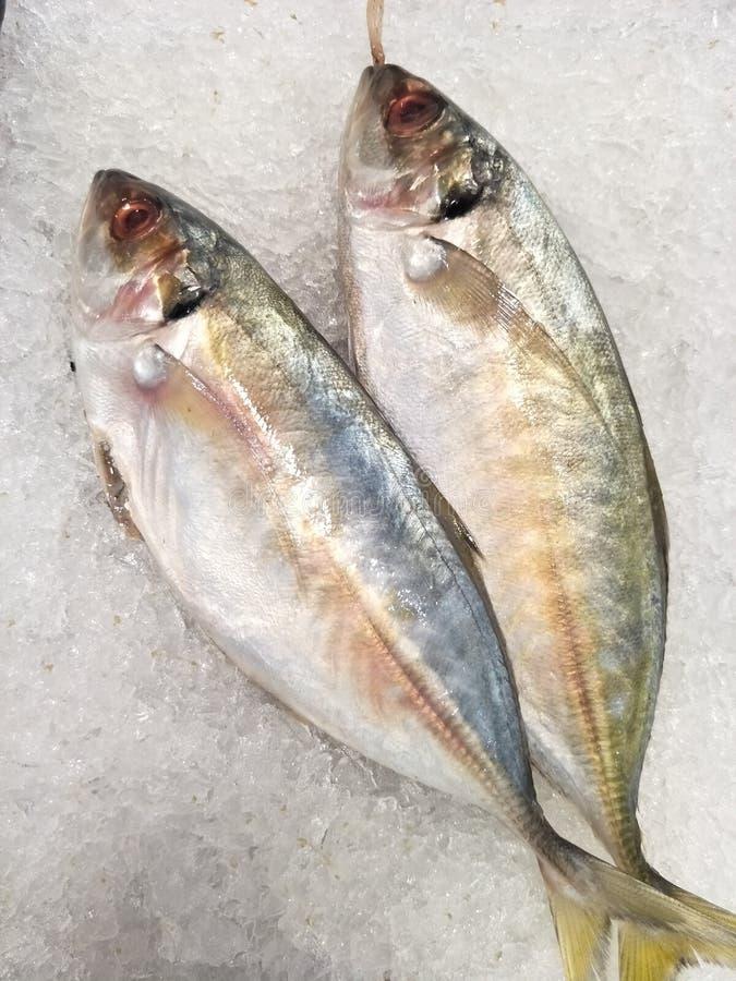 Surowe ryby na rynku zdjęcia stock
