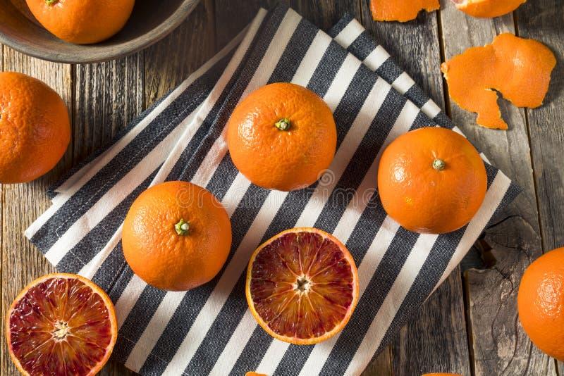 Surowi Organicznie Rubinowi tango Krwionośnej pomarańcze Clementines fotografia stock