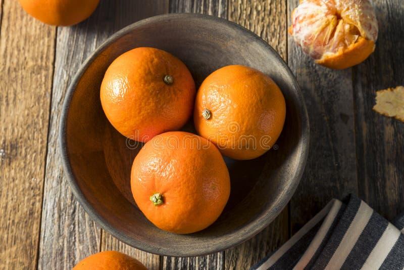 Surowi Organicznie Rubinowi tango Krwionośnej pomarańcze Clementines obrazy stock