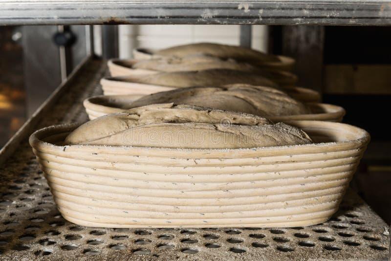 Surowi zaczyniający chleby przygotowywali na stojaku przed umieszczać w piekarniku Pojęcie pieczenie i ciasto sklepy fotografia royalty free