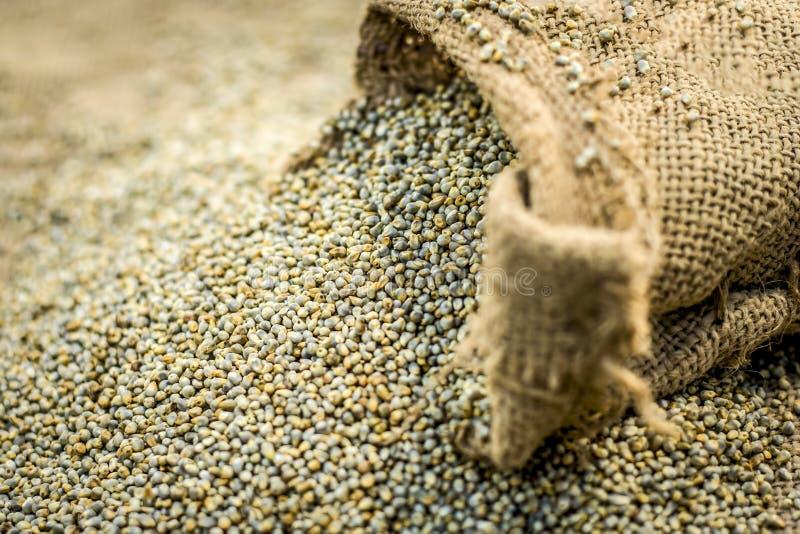 Surowy organicznie Pennisetum glaucum, Perełkowej jagły przybycie z gunny torby obrazy royalty free