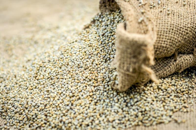 Surowy organicznie Pennisetum glaucum, Perełkowej jagły przybycie z gunny torby zdjęcie royalty free