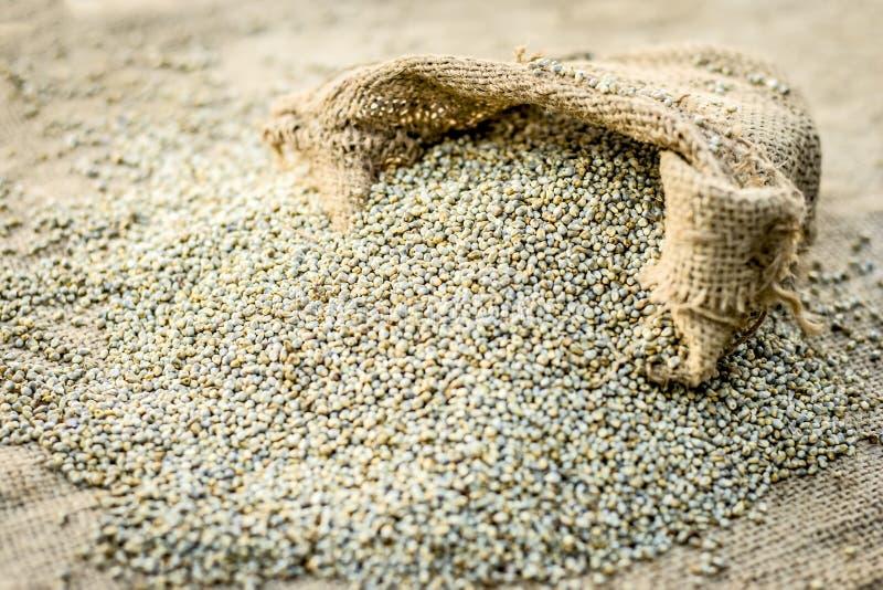 Surowy organicznie Pennisetum glaucum, Perełkowej jagły przybycie z gunny torby zdjęcia stock