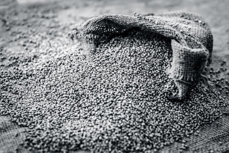 Surowy organicznie Pennisetum glaucum, Perełkowej jagły przybycie z gunny torby zdjęcie stock