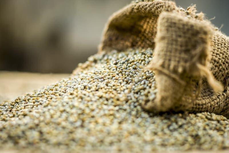 Surowy organicznie Pennisetum glaucum, Perełkowej jagły przybycie z gunny torby Pojęcie głód obraz stock