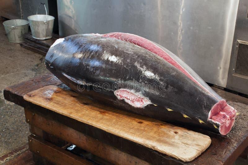 Surowy tuńczyka ciało zdjęcie royalty free
