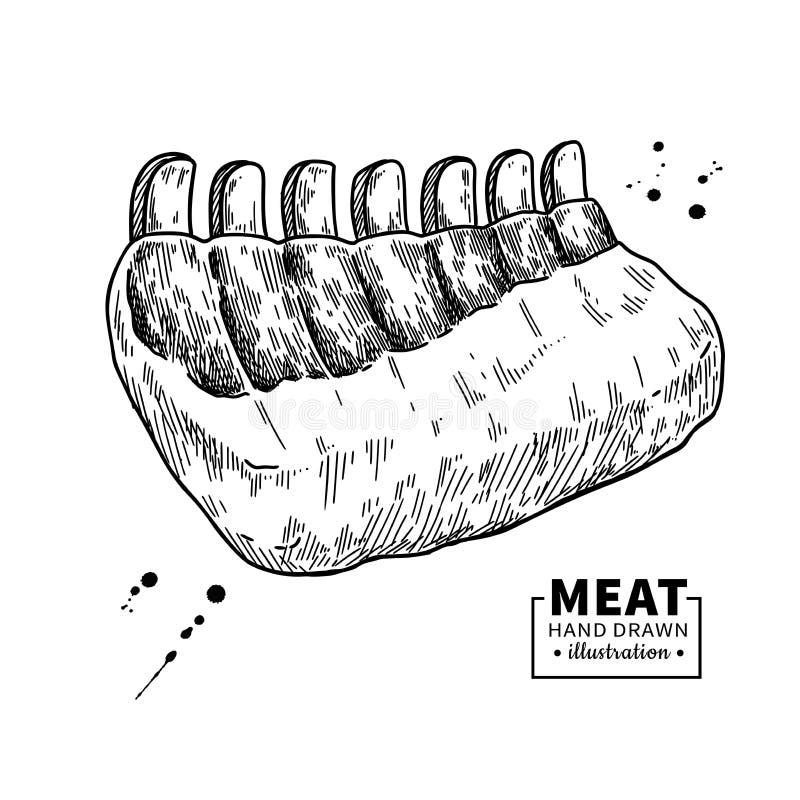 Surowy ziobro wektoru rysunek Wołowiny, wieprzowiny lub baranka mięsna ręka rysujący nakreślenie, ilustracja wektor