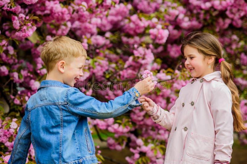 Surpreendente ela Crian?as que apreciam a flor de cerejeira cor-de-rosa Beb?s rom?nticos Dando todas as flores a ela Acople crian imagens de stock royalty free