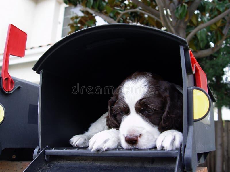 Surpresa grande no correio foto de stock
