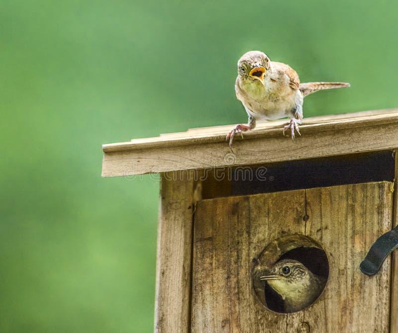 Surpresa pequena do pássaro
