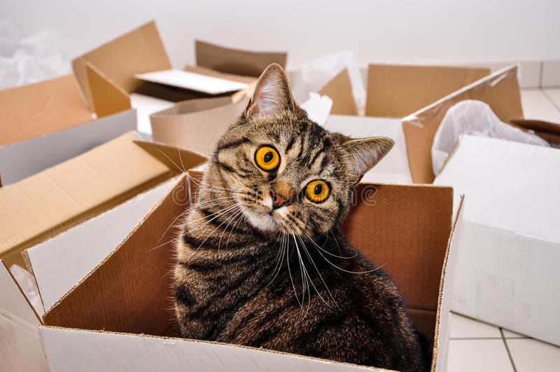 Cat in box. Moving to a new house, packing royalty free stock photo