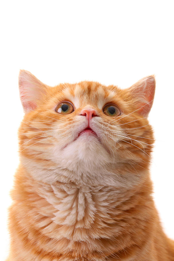 Download Surprise Cat Looking Up Stock Images - Image: 16538504