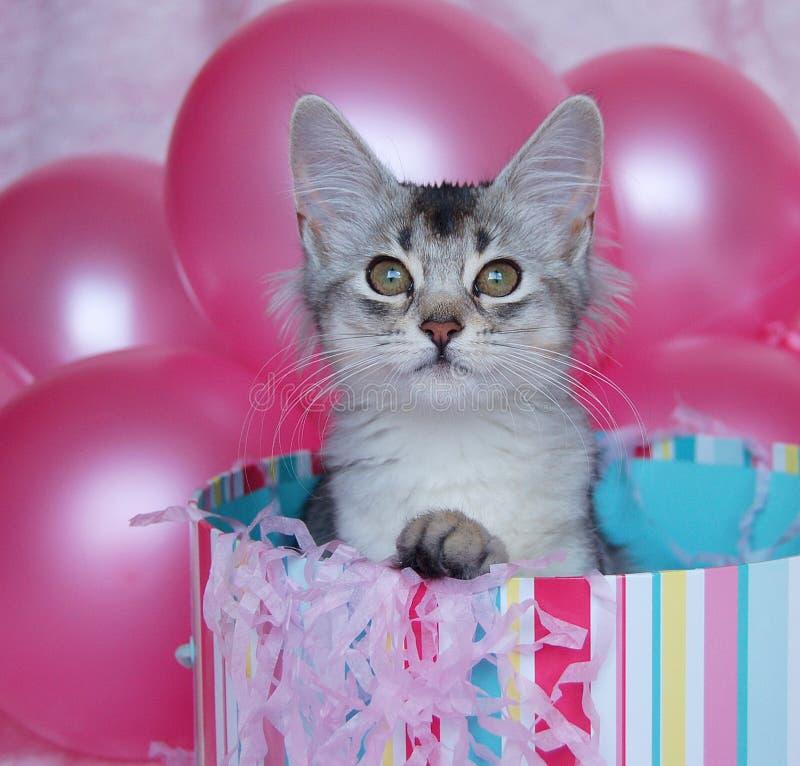 Surprise de chaton ! photos stock