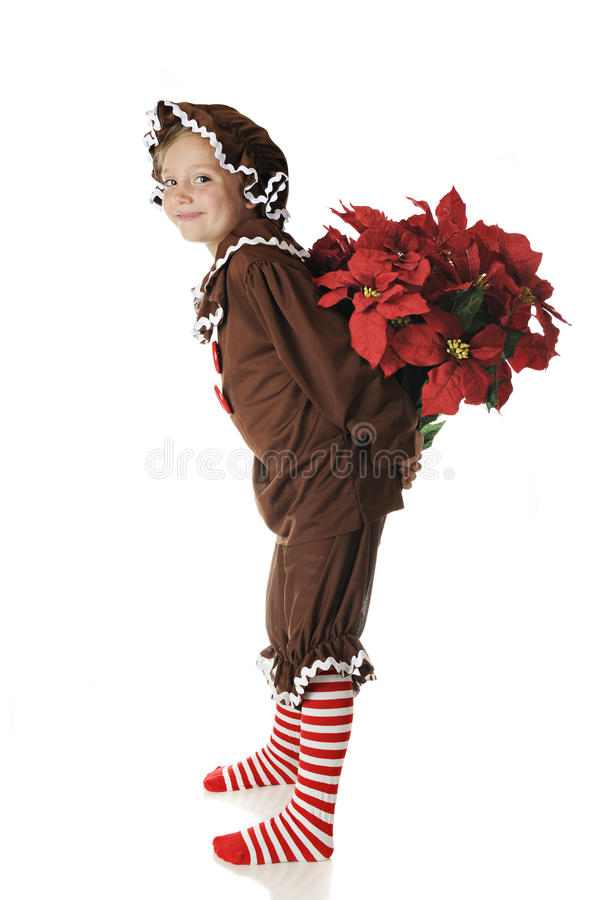 Download Surprise Poinsettias stock image. Image of holiday, bouquet - 26657397