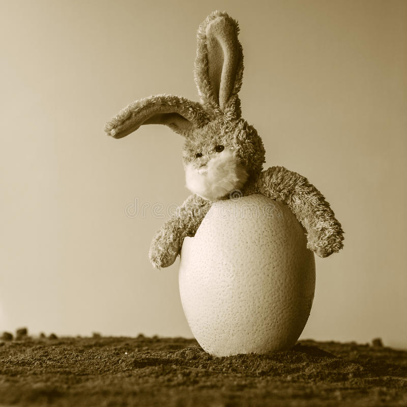 Surprised Easter teddy bunny in a egg. Teddy boggle bunny sitting in a big broken egg royalty free stock image
