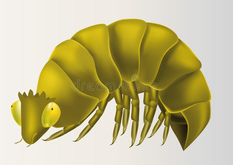 Surprising caterpillar from