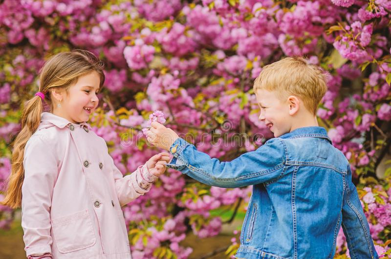 Surprising her. Kids enjoying pink cherry blossom. Romantic babies. Giving all flowers to her. Couple kids on flowers of royalty free stock photos