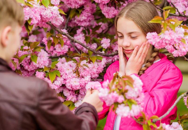 Surprising her. Romantic teens. Kids enjoying pink cherry blossom. Tender bloom. Couple kids on flowers of sakura tree royalty free stock image