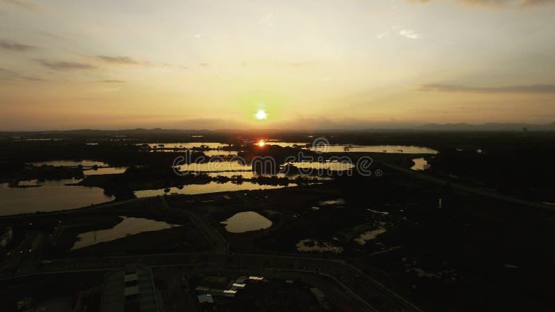 Surr som skjutas av en solnedgång arkivfoton