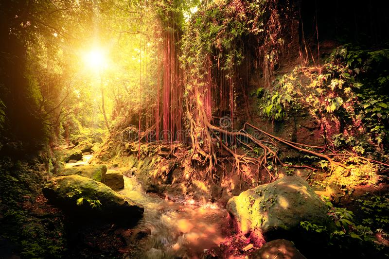 Surreal colors of fantasy tropical forest royalty free stock photos